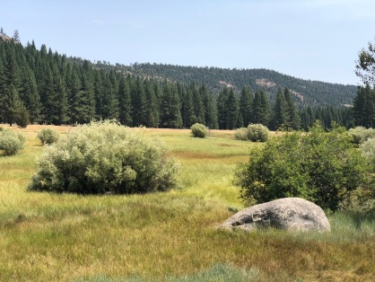 A view of the meadow.
